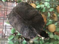 #tartaruga #mia #foto #amodomio