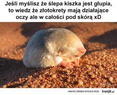 Złotokret Weekend Humor, Best Memes, The Twenties, Harry Potter, Jokes, English, Feelings, Funny, Animals