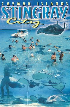 Grand Cayman Stingray City; my favorite part of the trip!