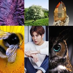 Celtic Zodiac // Hawthorn, Bee & Owl, Purple, Topaz // No Minwoo