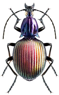 brachygnathus angusticollis - Future projects - # Future You Beetle Insect, Insect Art, Bug Insect, Cool Insects, Bugs And Insects, Cool Bugs, A Bug's Life, Beautiful Bugs, Hans Christian