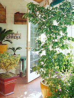 Consejos para guardar plantas de exterior en casa