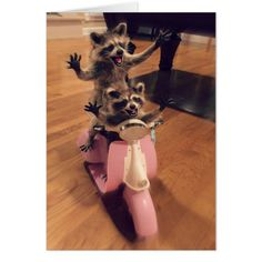 LIVE THE DREAM. CARD - two raccoons riding a pink scooter waving their arms in the air - funny note cards for sending to friends and family #notecards #funny #raccoons #cards AFFILIATE LINK