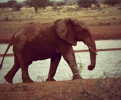 #africa elephant one love