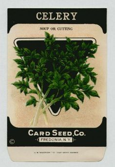 Antique Card Seed Company   Celery