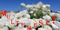 Felicitari de multumire - Multumesc! - mesajeurarifelicitari.com Love Rain, Hanukkah, Christmas Wreaths, Floral Wreath, Thankful, Romantic, Holiday Decor, Emoji, Floral Crown