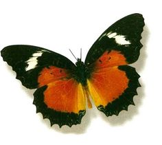 so normally i hate butterfly stuff but i love these kind.