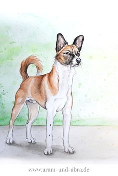Zeichnung von Basenji nach Foto, Windhund, Aquarell, Hund, Kunst, Illustration, Aram und Abra, Hundeblog, www.aram-und-abra.de