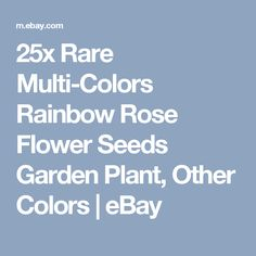 25x Rare Multi-Colors Rainbow Rose Flower Seeds Garden Plant, Other Colors   | eBay