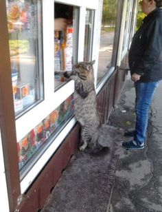 Hello, I would like to buy the catnip, please.