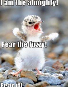 Fear it!!!