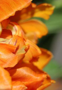 Fierce Orange