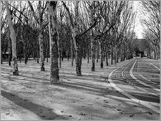 Bordeaux quinconces 01 - Place des Quinconces - Wikipedia, the free encyclopedia