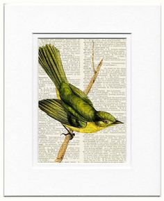 I've enhanced this awesome 1800s bird artwork and digitally printed the image directly onto the book page. Voila, it's unique, beautiful and affordable artwork with exquisite color and old world charm.. The print you receive will be on a different page from the same book. SIZED for a standard 8x10 mat with an opening for a 5x7 print. The single image with mat shows how the artwork fits inside this mat opening.  Mat not included. Mat is available and listed separately…