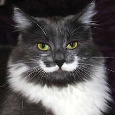 Hamilton the Hipster Cat | 14 Famous Internet Cats Who Should Never Retire