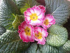 Quaretto di fiori