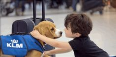 An Airline Just Hired An Adorable Dog For Its Lost-And-Found Team
