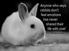 Rabbit care advice caitlin's rabbit, dwarf rabbit и bunny Funny Rabbit, Funny Bunnies, Baby Bunnies, Cute Bunny, Bunny Bunny, Funny Animal Videos, Videos Funny, New Zealand Rabbits, Baby Animals