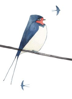 Matt Sewell » Blog Archive » Bird of the week – The swallow