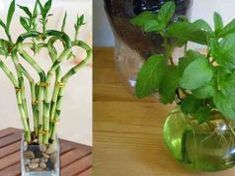 5 növény, ami valóban gazdagságot, jólétet, sok szerencsét, szeretetet és egészséget hoz az otthonodba! Aloe Vera, Glass Vase, Plants, Home Decor, Decoration Home, Room Decor, Plant, Home Interior Design, Planets
