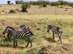 Experience wildlife while interacting and observing them of how they contributed in maintaining balance in our ecosystem. Timon And Pumbaa, Simba And Nala, Kenya Africa, Safari, This Is Us, Wildlife, Travel, Viajes, Timon & Pumbaa