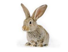 http://iamkoream.com/wp-content/uploads/2011/02/rabbit3.jpg