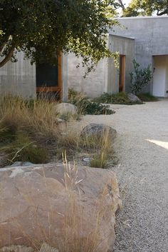 Tired of watering and mowing grass? Here are some great alternatives. 'mediterranean landscape by Lane Goodkind Landscape Architect'