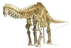 Risultati immagini per brontosaurus skeleton