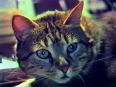 Chris Marker. Chat écoutant la musique. 1990