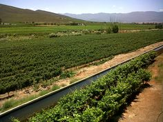 The Bonnievale Canal since 1900 - the life vein of the wine industry in this area