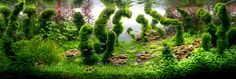 The Incredible Underwater Art of Competitve Aquascaping plants fish aquariums