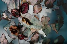 Botanical arrangements - Janneke Luursema / photographer