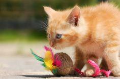 Zabawki dla kotów