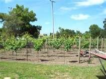 vineyard back yards
