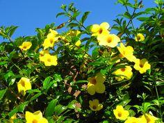 .: Flores comestíveis: Porque sim e Porque não