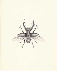 Stag Beetle  Original pencil drawing in by GrasshopperGallery, $110.00