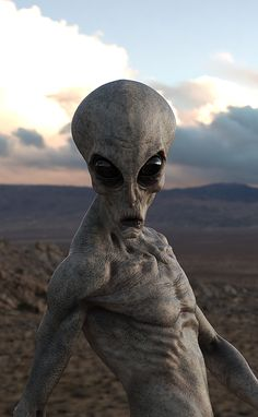 Area 51 has been a mystery since It is a very secretive military testing site believed to contain hidden Alien artifacts and information. This image represents a hypothetical full color HD photo of an Alien in Area 51 from the year Les Aliens, Aliens And Ufos, Ancient Aliens, Alien Creatures, Fantasy Creatures, Mythical Creatures, Alien Pictures, Alien Photos, Alien Tattoo