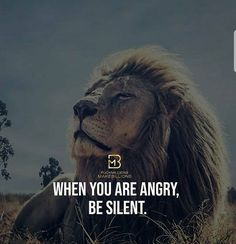 Lions Photos, Lion Quotes, Photo Quotes, Beast, Instagram, Leo, Motivational Quotes, Facts, King