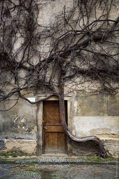 Tree and door