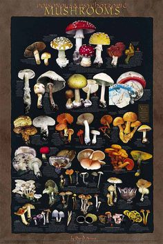 Poisonous and Psychotropic Mushrooms Poster  Psychedelic Mushrooms