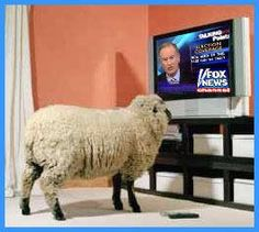 Fox News viewers