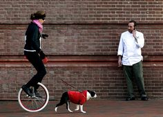 Unicycling dog walker in Baltimore - PhotoBlog