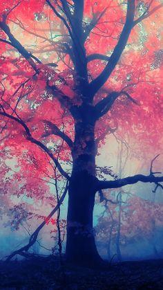 Es un árbol que quisiera tener *-*