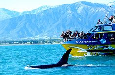 Whale watching @ Kaikoura. REALLY want to do.