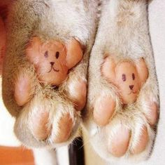 So cute. Need to look and see if my dog's feet look like this!