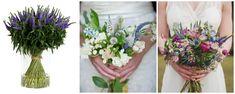veronica mov - buchete de mireasa alb roz lila - flori in culoarea anului 2018: ultraviolet Veronica, Plants, Plant, Planets