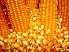 milho.jpg (1200×900)Os EUA - o rei do milho ,leite, frango e carne bovina http://www.cnpms.embrapa.br/publicacoes/milho_7_ed/economia.htm