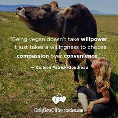 Being vegan doesnt take willpower. It just takes a willingness to choose compassion over convenience - Colleen Patrick-Goudreau Quotes Vegan, Vegan Memes, Vegan Humor, Vegan Funny, Why Vegan, Vegan Vegetarian, Vegetarian Memes, Vegan Raw, Reasons To Be Vegan