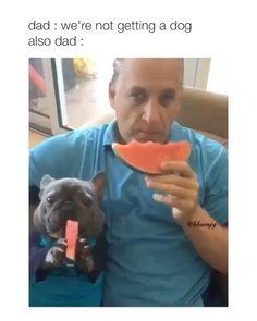 Animal Jokes, Funny Animal Memes, Dog Memes, Funny Animal Pictures, Funny Memes, Cute Funny Dogs, Cute Funny Animals, Cute Dogs And Puppies, Doggies