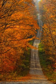 Maple trees overhanging Burnett's side road, Sheguiandah, Manitoulin Island, Ontario, Canada by Corbus images
